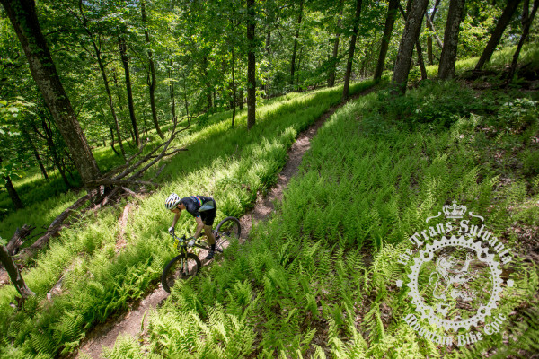 A rider on sweet, fern-lined singletrack through central Pennsylvania's lush, green forests during the NoTubes Trans-Sylvania Epic mountain bike stage race presented by Dirt Rag Magazine.
