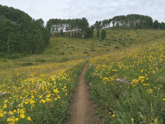 I couldn't believe the amount of wild flowers out in CB!